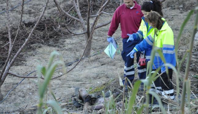Los técnicos de emergencias observan los restos calcinados del vecino de Cieza.
