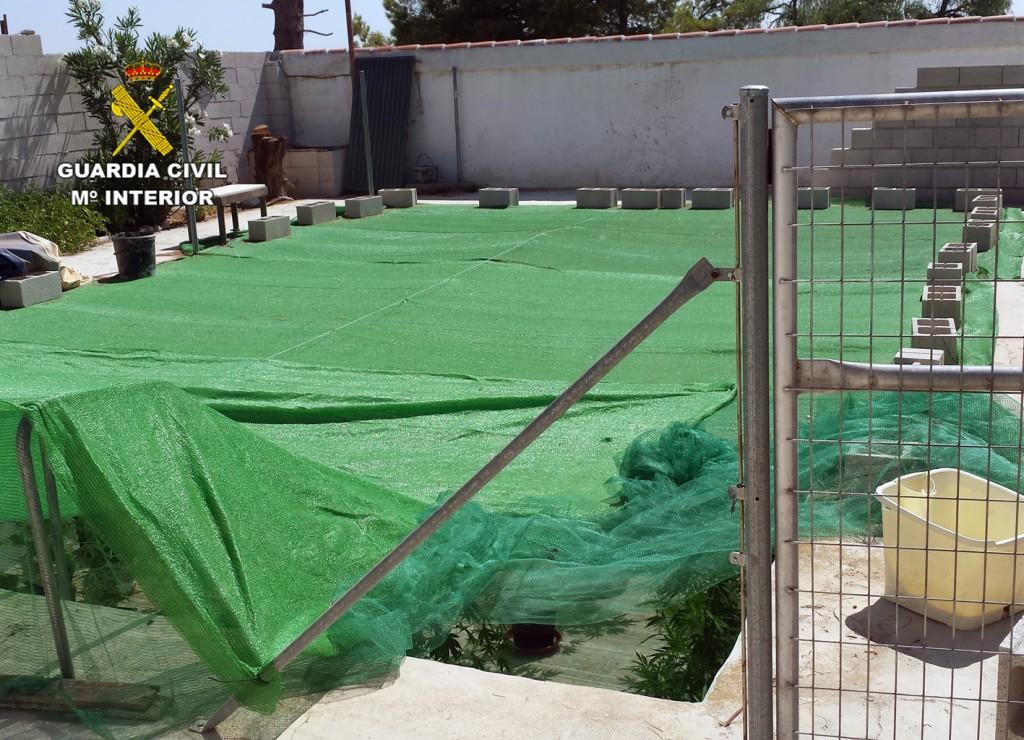Una plantación de marihuana en una piscina de Bullas