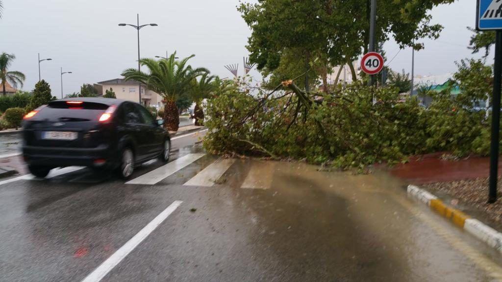 Ramas de los árboles caídas sobre la calzada en Alhama. Juan Caballero